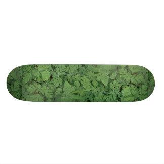 Leaves of Dutchman s breeches Custom Skate Board