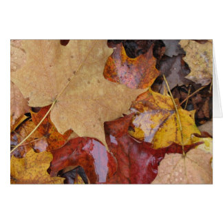 Leaves of Many Colors Card