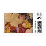 Leaves of Many Colors Postage Stamps