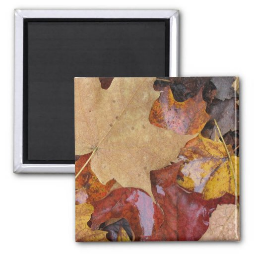 Leaves of Many Colors Refrigerator Magnet