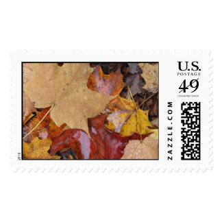 Leaves of Many Colors Stamps