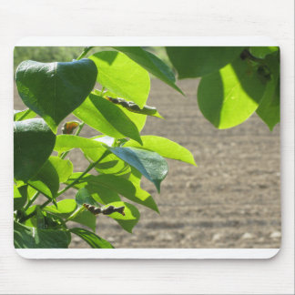 Leaves of persimmon tree against plowed field mouse pad