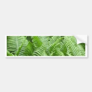 Leaves of Polystichum ferns Bumper Sticker