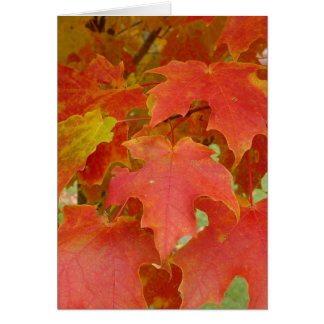 Leaves of Red Card