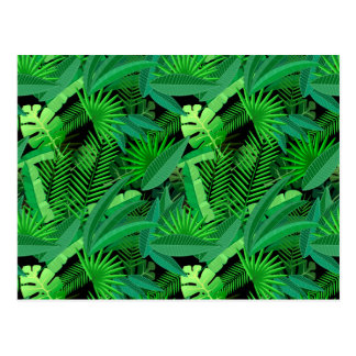 Leaves Of Tropical Palm Trees Postcard
