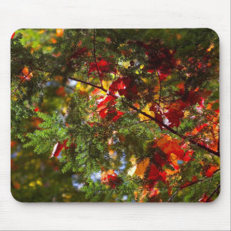 Leaves on evergreen mouse pad