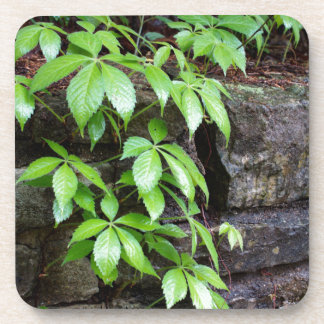 Leaves on Old Stone Wall Coaster