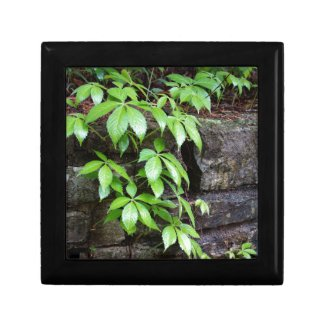 Leaves on Old Stone Wall Gift Box