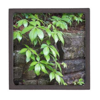 Leaves on Old Stone Wall Keepsake Box