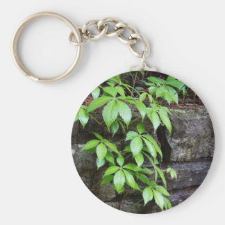 Leaves on Old Stone Wall Keychain