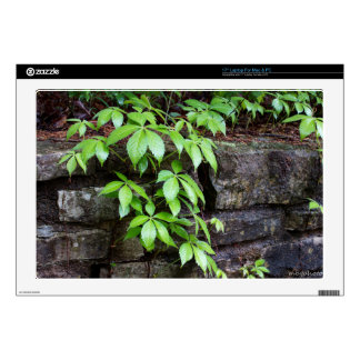 Leaves on Old Stone Wall Laptop Decal
