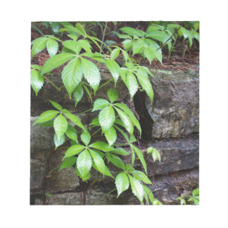 Leaves on Old Stone Wall Notepad