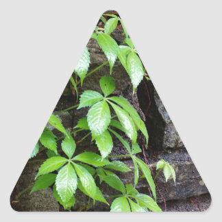 Leaves on Old Stone Wall Triangle Sticker