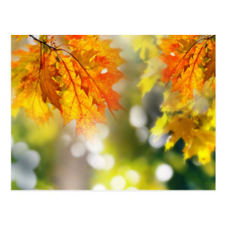 Leaves on the branches in the autumn forest postcard