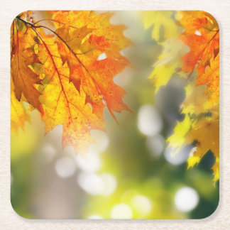 Leaves on the branches in the autumn forest square paper coaster