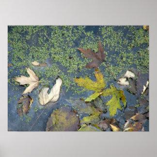 Leaves on water print