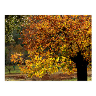Leaves sea breams of the chestnut tree in autumn i postcard