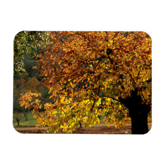 Leaves sea breams of the chestnut tree in autumn magnet