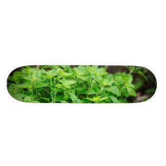 Leaves Skateeboard Skateboard