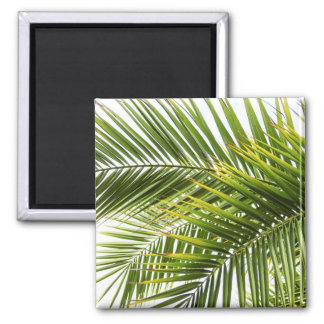 Leaves tropical palm tree leaf summer photo magnet