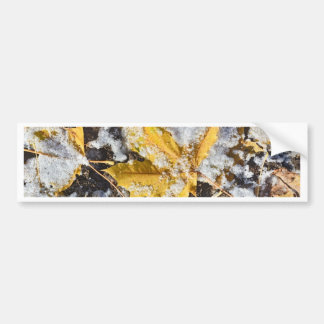 Leaves with Snow Bumper Sticker