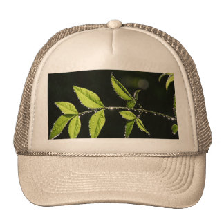 leaves with water drops hat