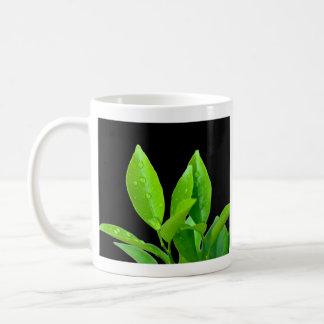 Leaves with Waterdrops on Black - Mug
