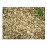 Leaves. Woodland floor. Leafy ground. Postcard
