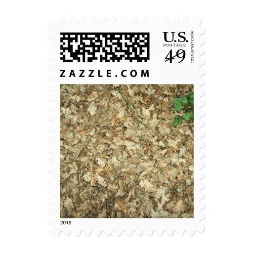 Leaves. Woodland floor. Leafy ground. Stamp