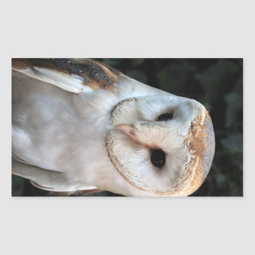 Lechuza común blanca rectangular altavoces
