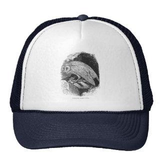 Lechuza común del vintage gorras