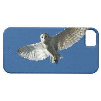 Lechuza común en vuelo diurno iPhone 5 carcasas
