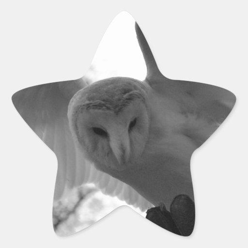 Lechuza común pegatina en forma de estrella