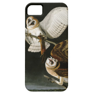 Lechuzas comunes Illustratation (Audubon) del iPhone 5 Carcasa