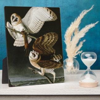 Lechuzas comunes Illustratation (Audubon) del Placas