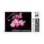 LECYTHIDACEAE: Couratari tenuicarpa Postage Stamps