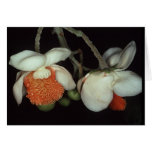LECYTHIDACEAE: Lecythis persistens Stationery Note Card