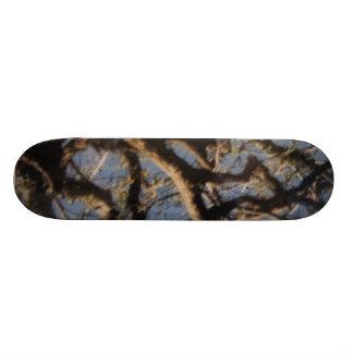 Ledges State Park Skateboard