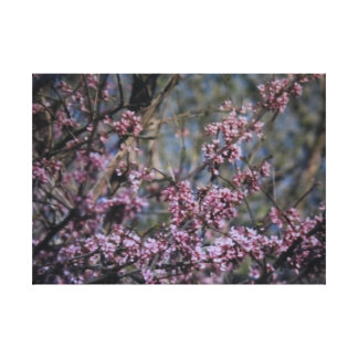 Ledges State Park Tree with Purple Flowers Canvas Canvas Print