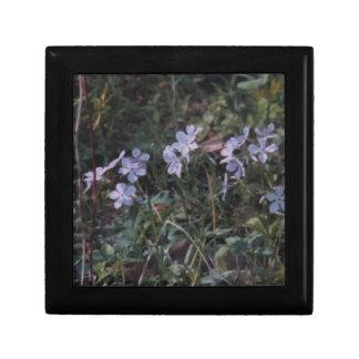 Ledges State Park Violet Flowers Jewelry Box
