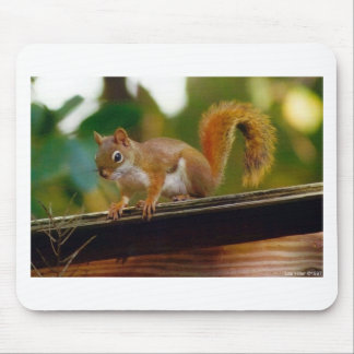 Lee Hiller Wildlife Photography Gifts (Squirrel) Mouse Pad