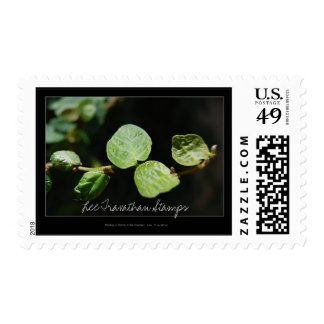 Lee Travathan Stamps - Finding a Home...