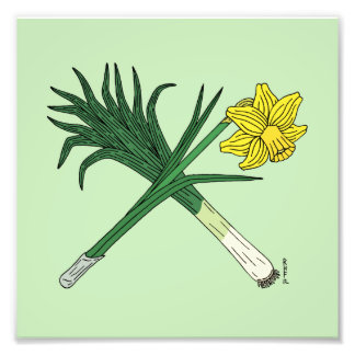 Leek and Daffodil Crossed Print Photographic Print