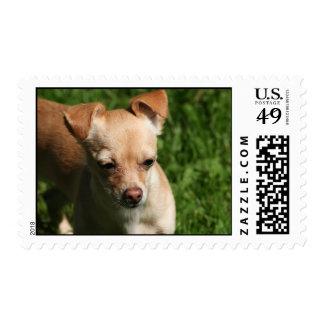 LeeLa I Stamps