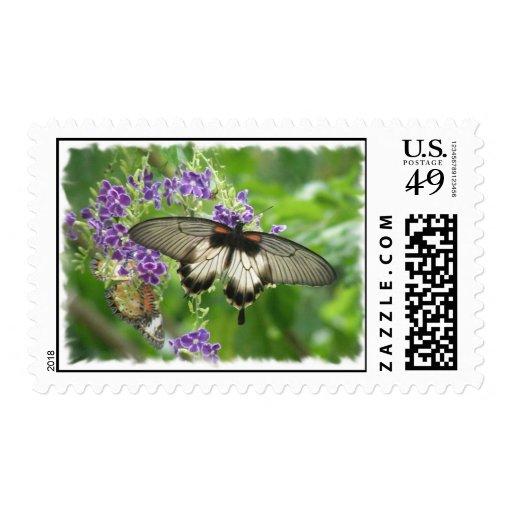 Legend of Buterflies Postage Stamp