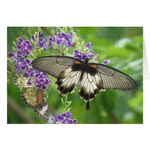 Legend of Butterflies Card