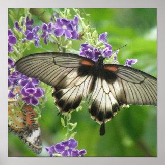 Legend of Butterflies Poster Print