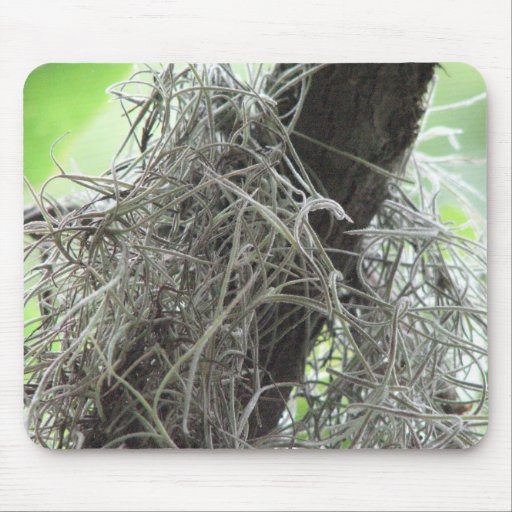 Legend of the Spanish Moss Mousepad