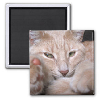 Legendary Proportions 2 Inch Square Magnet