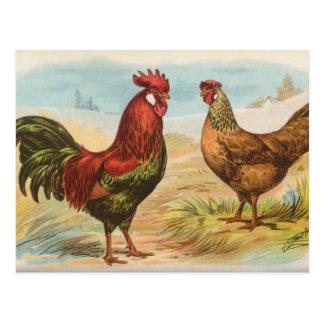 Leghorns Post Card